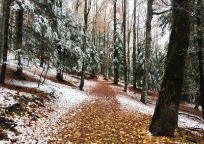 Bosque de las hayas